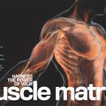 Muscle Matrix Thumbnail